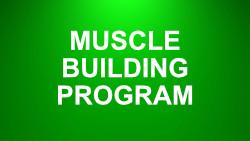 sidebar muscle